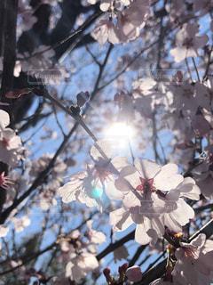 春の陽気の写真・画像素材[1875513]