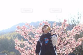 桜の写真・画像素材[1844273]