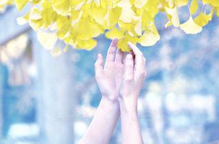 花を持っている手の写真・画像素材[1869654]