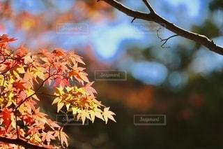 自然の写真・画像素材[2604840]