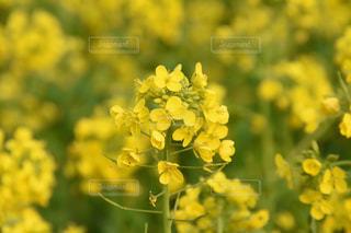 公園,花,春,黄色