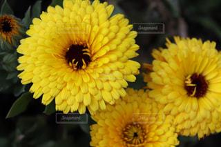 花が好きの写真・画像素材[2145217]