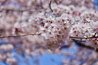 春の喜びの写真・画像素材[2145228]