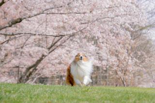 桜の木の下での写真・画像素材[1843847]
