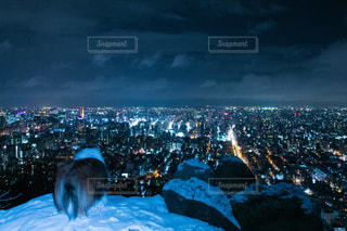 犬,風景,夜景,後ろ姿,北海道,景色,街,札幌,一眼レフ
