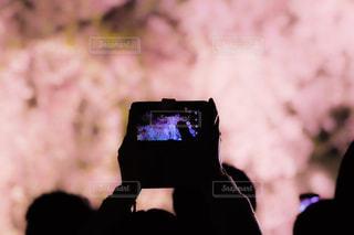 春,桜,京都,ピンク,花見,夜桜,スマホ,満開,二条城,pink,インスタ映え