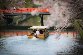 春,桜,京都,ピンク,舟,船,花見,満開