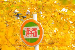 風景,秋,紅葉,黄色,標識,イチョウ,通学,イエロー,カラー,色,通学路