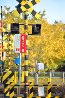 風景,秋,紅葉,電車,黄色,線路,イチョウ,イエロー,踏切,カラー,色