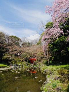 花,桜,屋外,お花見,都会の桜