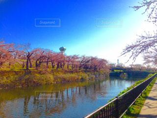 桜の写真・画像素材[1851717]