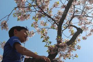 子ども,公園,春,桜,お花見,人物
