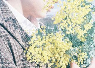 花,冬,黄色,flower,ミモザ,イエロー