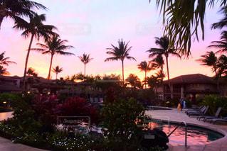 自然,風景,空,屋外,ピンク,プール,夕暮れ,水面,樹木,ヤシの木,ハワイ,リゾート,眺め,パーム,休暇