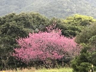 自然,風景,冬,山,旅行,奄美大島,ビュー,レジャー・趣味,宇検村