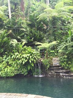 景色,旅行,ジャングル
