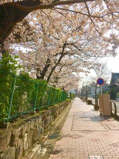 公園,春,桜,お花見,平成最後の春