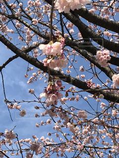 空,春,桜,季節,花見,暖かい,「春」,「桜」,「花見」