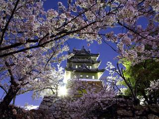 花,春,桜,夜桜,Sakura,さくら