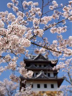 花,春,桜,Sakura,さくら