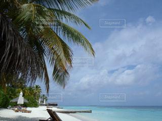 空,モルディブ,砂浜,樹木,旅行,リゾート,海外旅行