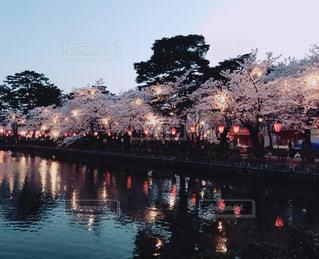屋台,花見,夜桜,お祭り,地元,新潟県