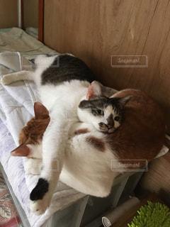 ソファで寝ている猫の写真・画像素材[2292617]