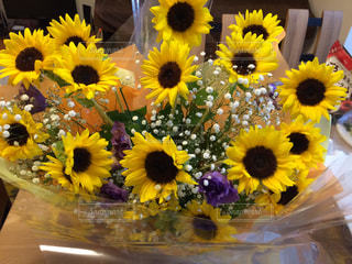 お誕生日プレゼントのひまわりの花束の写真・画像素材[3115182]