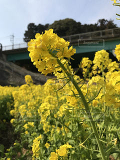 花,春,黄色