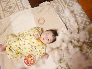 桜,室内,花見,人物,人,赤ちゃん