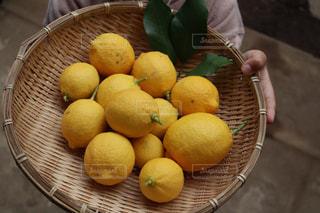 庭,かわいい,黄色,手,果物,人物,外,人,レモン,籠,果実,こども,幼児,ナチュラル,収穫,5歳,お手伝い,カゴ,男児,フォトジェニック,映え,色・表現