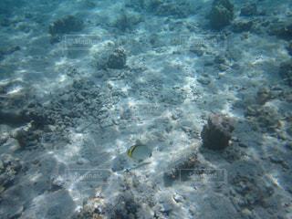 タヒチの海中の景色の写真・画像素材[1854759]