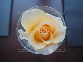 淡いオレンジ色の花の写真・画像素材[1942416]