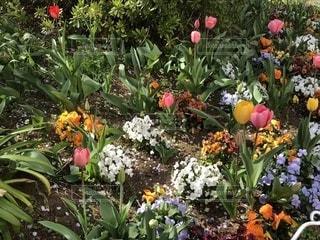 様々な花の写真・画像素材[1955239]