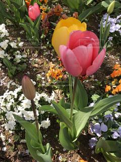 春の花の写真・画像素材[1955285]