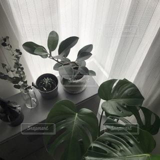 テーブルの上に座っている花で満たされた花瓶の写真・画像素材[2725201]