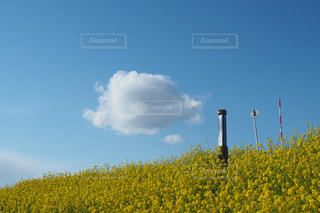空,春,看板,雲,青,菜の花,ノスタルジック,綿雲
