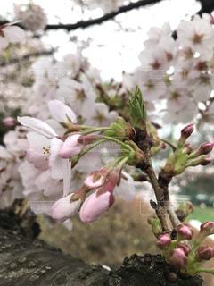 花の写真・画像素材[427365]