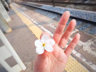 花,春,桜,駅,手,花びら,女,人物,人,鉄道,地元,さくら,blossom