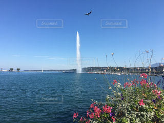 ジュネーブの大噴水と鳥と花との写真・画像素材[1852447]