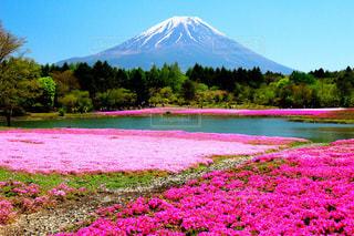 自然,桜,富士山,絶景,緑,olympus,景色,お花見,旅行,ミラーレス