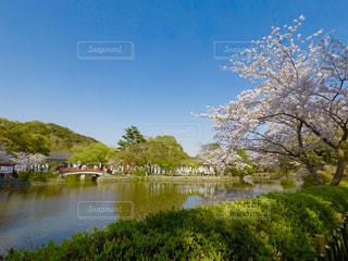 自然,風景,桜,カメラ女子,olympus,景色,お花見,和,鎌倉,ミラーレス