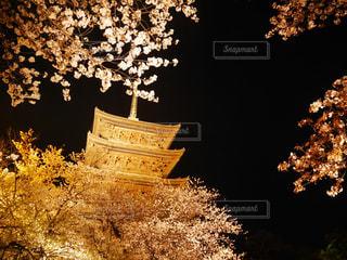 春,桜,ライトアップ,寺