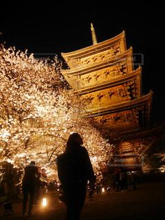 女性,春,桜,夜桜,ライトアップ,寺,人影