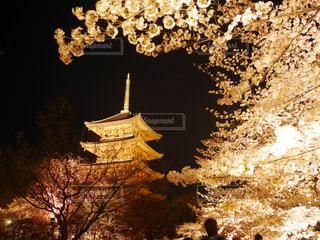 春,桜,夜桜,ライトアップ,寺