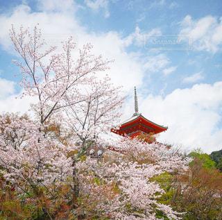 春,桜,青空,寺