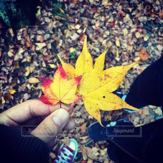 紅葉,森,葉っぱ,黄色,yellow