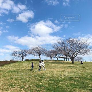 背景に木々のある大きな緑のフィールドの写真・画像素材[3083274]