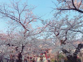 桜,青空,お花見,桜吹雪,お寺,寺
