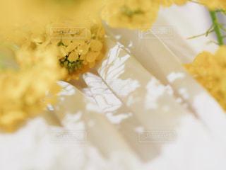 食品のプレートの写真・画像素材[1854067]